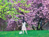 allergy-trees