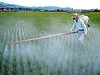 pesticide-adhd