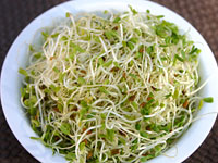 raw-alfalfa-sprouts