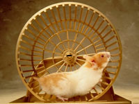 metabolism hamster 200x150 Slow Metabolism Is More Common Than You Think