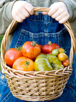 basket-heirloom-tomatoes
