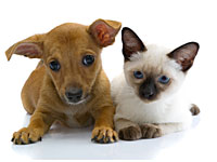 cat vs dog 200 Are Cats or Dogs Better for Your Health?