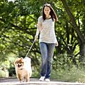 stripes-walking-dog