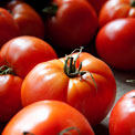 tomatoes-lycopene-cancer