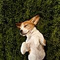 cute-puppy-mode