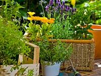 garden-tools-you-need