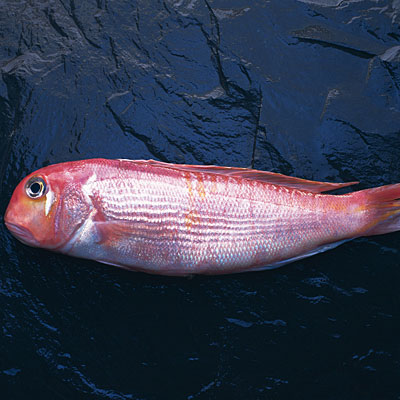 Tilefish 10 Fish You Should Avoid And Why