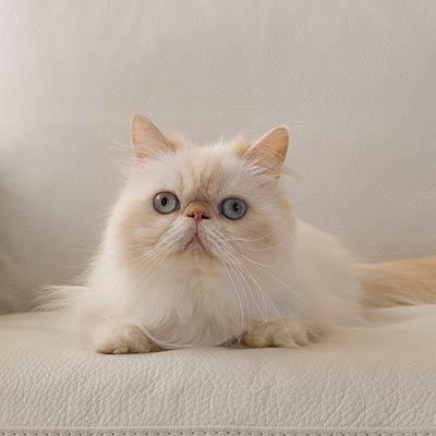 fat-cat-overweight