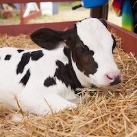 hypoallergenic-cows-milk