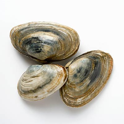 vitamin-b12-clams