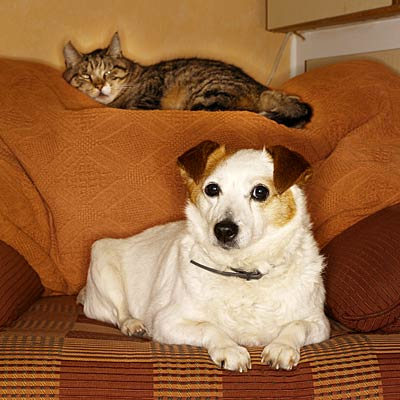 Keep Fluffy Off The Couch How To Reduce Pet Allergens At