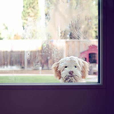 keep-dog-outside