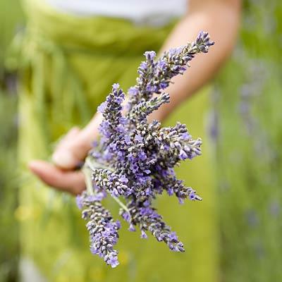 herb-garden-lavender