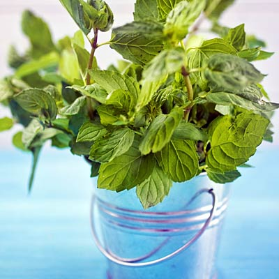 mint the best herbs to grow and eat at home. Black Bedroom Furniture Sets. Home Design Ideas