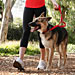 Running With Your Dog: 17 Dos and Don'ts
