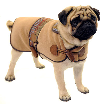 Mulberry - stylish gifts - dog sweater