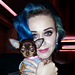 Celebrity Pets: Angelina Jolie's Bulldog, Katy Perry's Chihuahua Moment