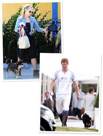 Kristen Bell, Prince Harry and Lupo
