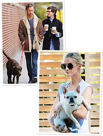 Celebrity Pets