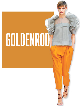 Goldenrod Color of the Day