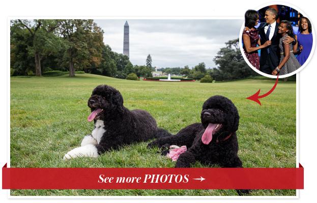 Sunny Obama - Celebrity Pets