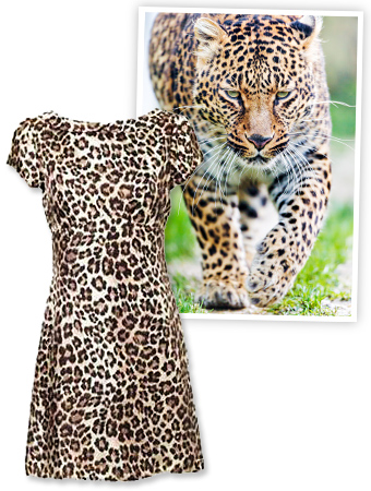 zoo-bans-animal-prints