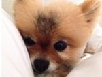 Lea Michele - Celebrity Pets