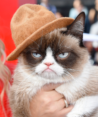 MTV Movie Awards - Grumpy Cat - Pharrell Hat