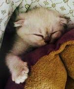 Taylor Swift's Kitten Olivia Benson