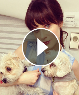 Zooey Deschanel's Instagram Secrets