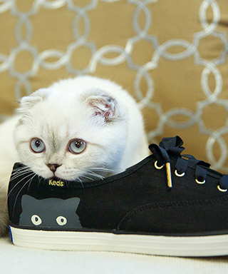 Taylor Swift's cat Olivia Benson models Keds shoes.