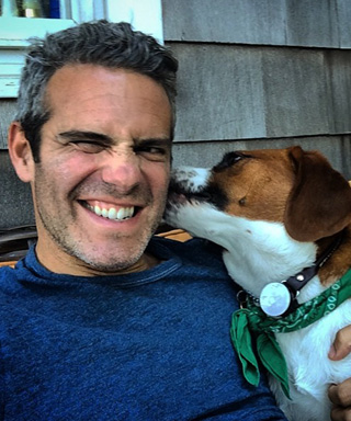 Andy Cohen's Dog Watcha
