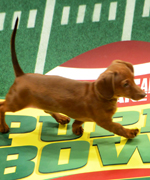 Behind the Scenes of the Puppy Bowl