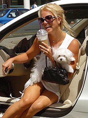 MAN'S BEST FRIEND photo | Britney Spears