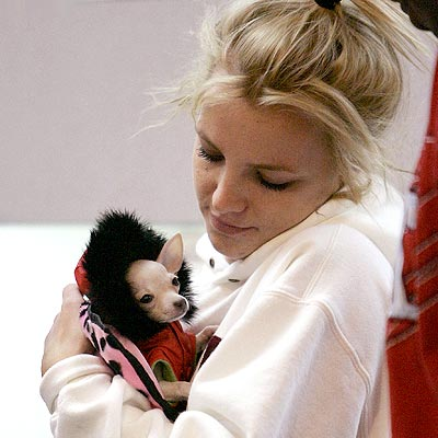 LUCKIEST PUP photo | Britney Spears