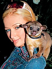 Paris Hilton's Pet Problem
