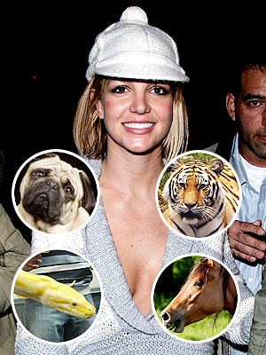Britney feels a special connection to which animal?