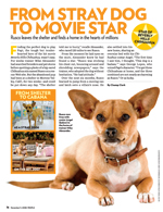 From Stray Dog to Movie Star