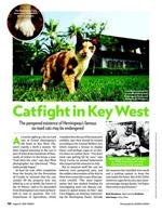 Catfight in Key West