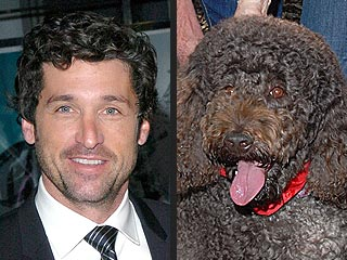 Costar Puts Patrick Dempsey in the Doghouse | Patrick Dempsey