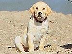 Dog Days: Match the Pet to Its Star! | Jim Carrey