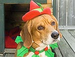 Santa Pets! Your Cats and Dogs in Holiday Style