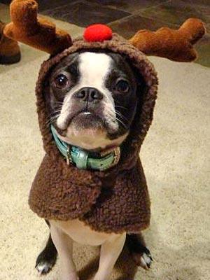reindeer_dog
