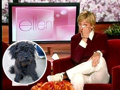 GETTIN' IGGY WITH IT photo | Ellen DeGeneres