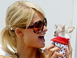 2007: The Year of the (Teeny, Tiny) Dog | Paris Hilton