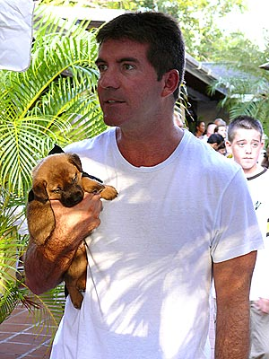 GOING SOFT?  photo | Simon Cowell