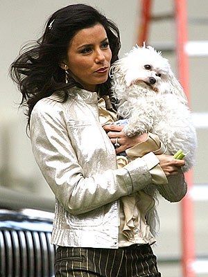 PUPPY & CHOW  photo | Eva Longoria