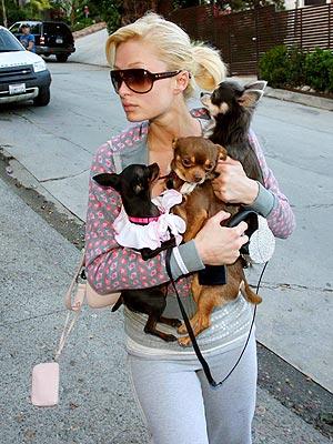 RUFF RIDERS photo | Paris Hilton