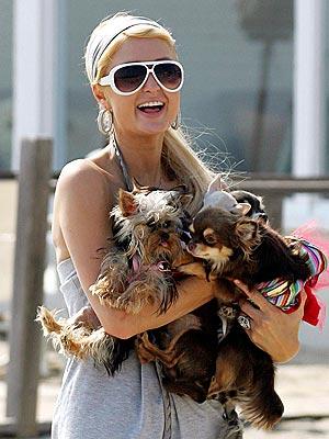 WAG THE DOG  photo | Paris Hilton