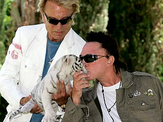 Siegfried & Roy Take Stage with Attack Tiger | Roy Horn, Siegfried